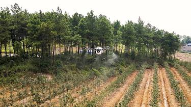 重慶:農業無人機有了智慧大腦
