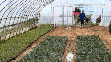 安徽肥西:特色農業助脫貧