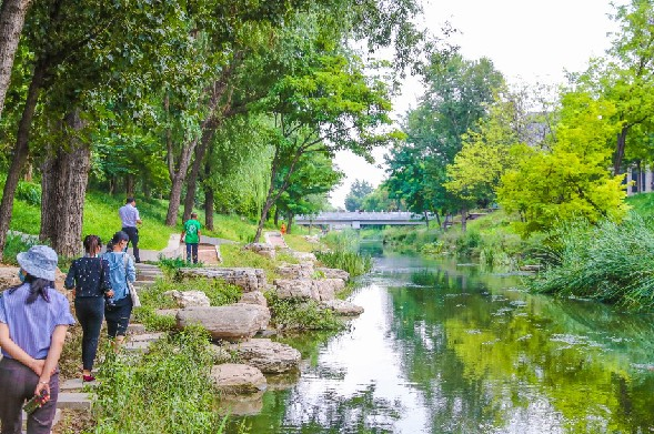 北京濕地在復蘇:4年恢復和新建近9000公頃