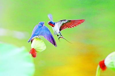 北京房山:綠水青山鳥自來