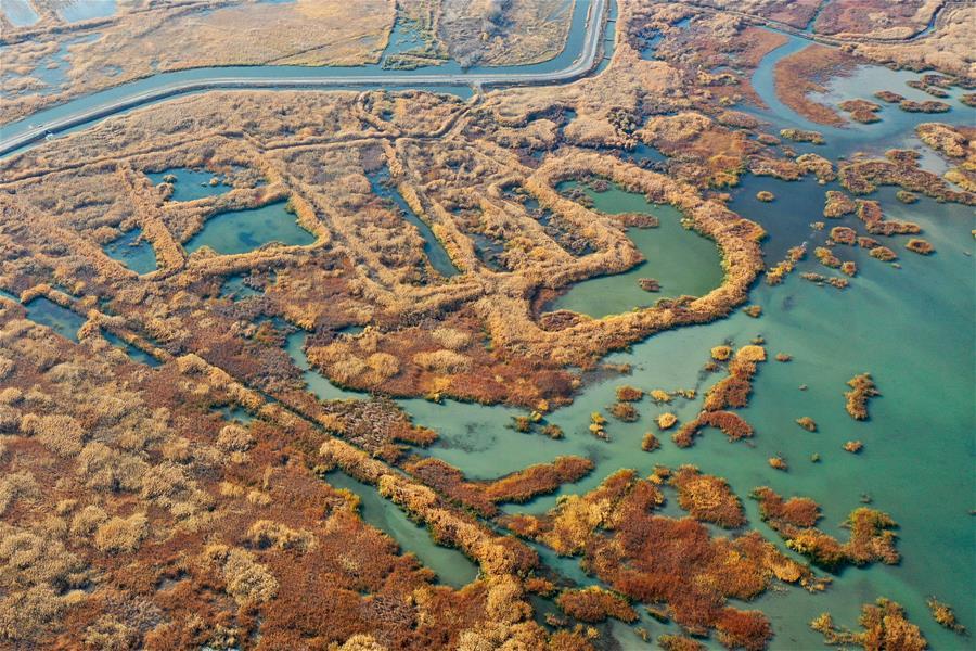 新疆瑪納斯:秋日濕地畫卷