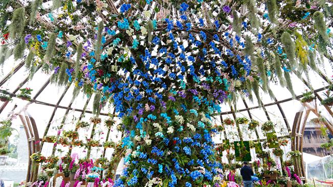 百余種世界珍稀花卉鬥艷長江上遊城市花博會