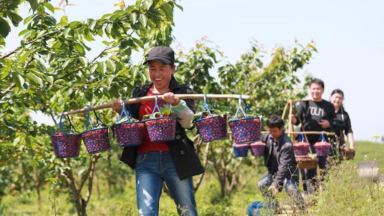 貴州玉屏:甕陽村的脫貧之路
