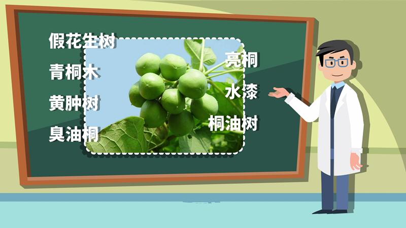 食麻風果中毒 警惕來自植物的威脅