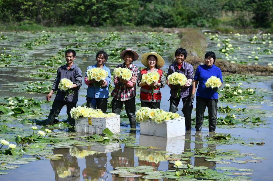 廣西柳州下陶村:一朵花闖出的致富路