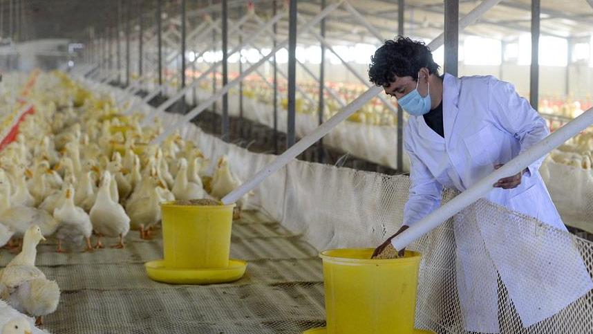 新疆洛浦縣:小鴨子做成大産業