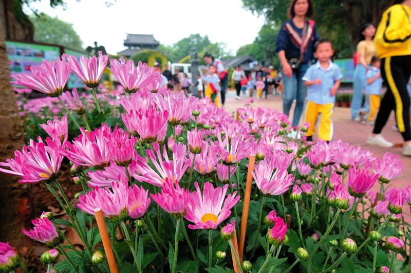 青秀山第五屆菊花展今日亮相 8萬盆菊花等你來賞