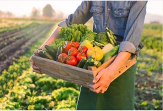 溫室蔬菜産銷旺 種菜農民致富忙