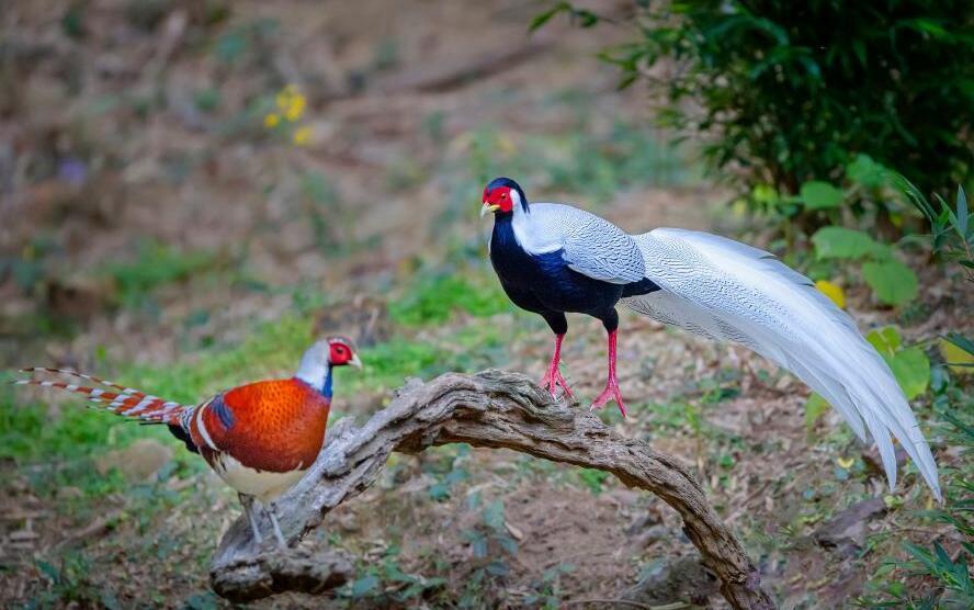 大美山村觀鳥熱