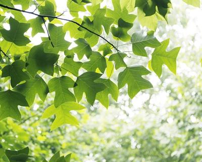 四川:預計今年碳排放強度較2005年下降75%以上