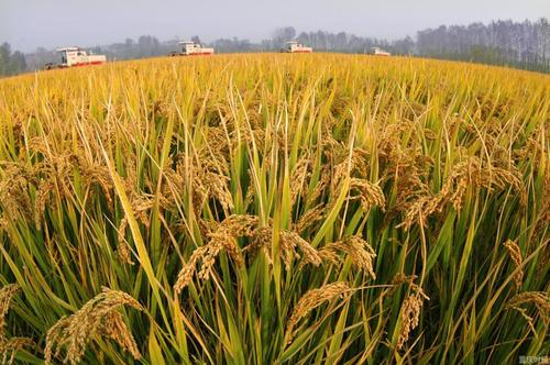 2022年重慶主糧作物農業保險覆蓋率將超過70%