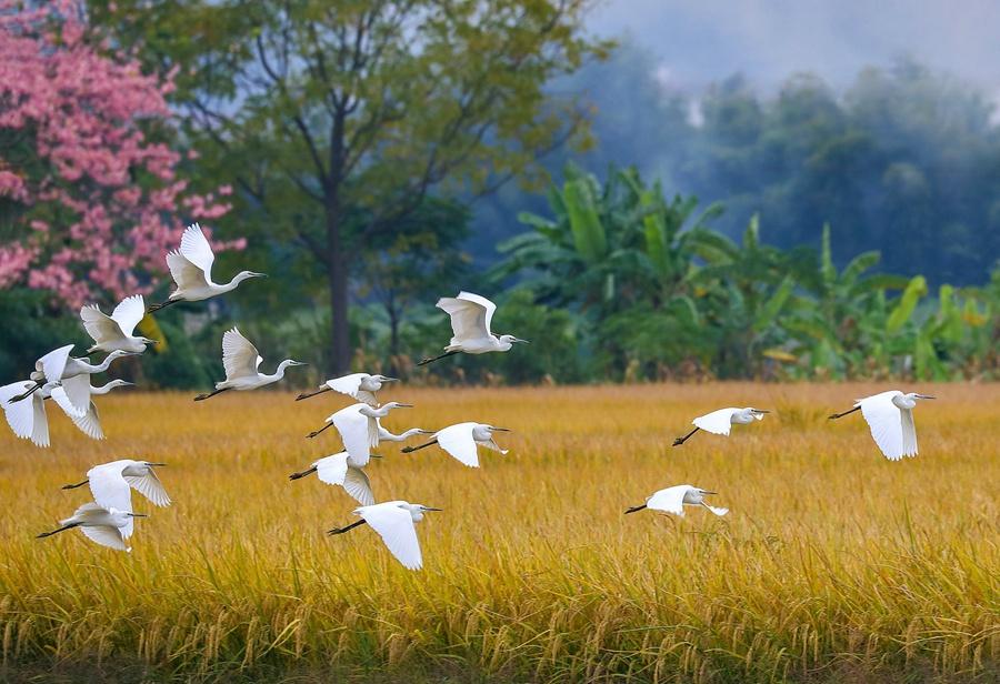 花兒、飛鳥、稻田……初冬田園醉人心