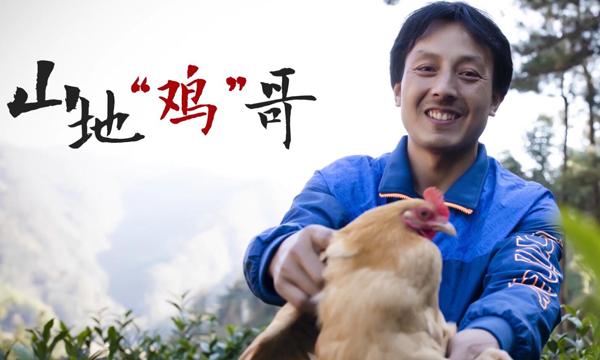 """曬曬我們的小康:鷂落坪上 山地""""雞""""哥"""