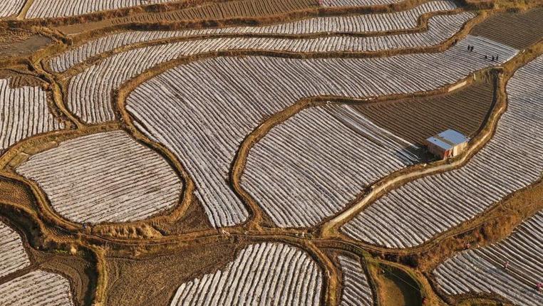 貴州丹寨:臘月田間務農忙