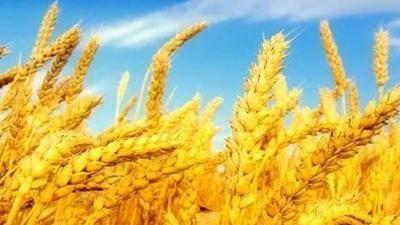2020年度四川省主要民生數據發布 糧食産量再次邁上3500萬噸臺階