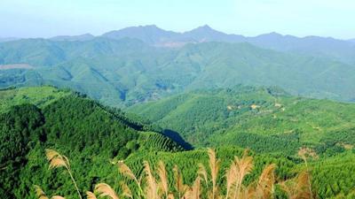 安徽19位省級領導任重點生態功能區省級林長