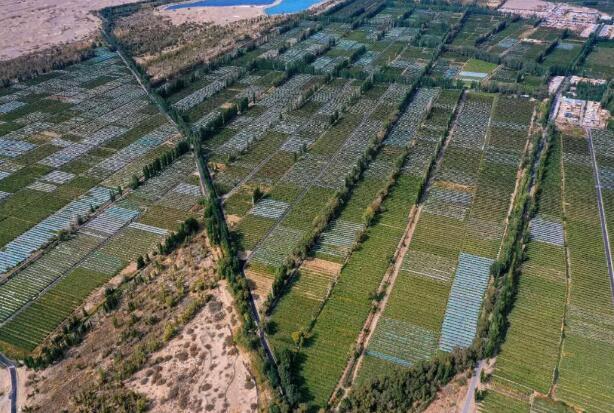 """""""敦煌毀林案"""":13300畝還是6000畝?有圖有真相"""
