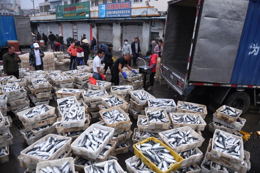 廣西北海:新春魚市旺