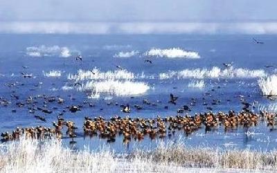 石羊河國家濕地公園 冰消雪融 水鳥飛翔