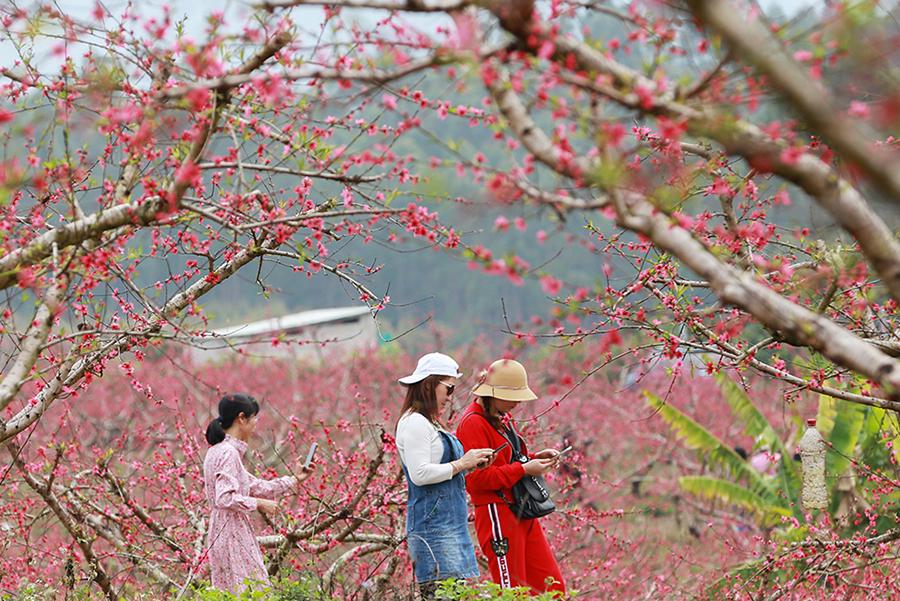 桃花朵朵開 醉了賞花人
