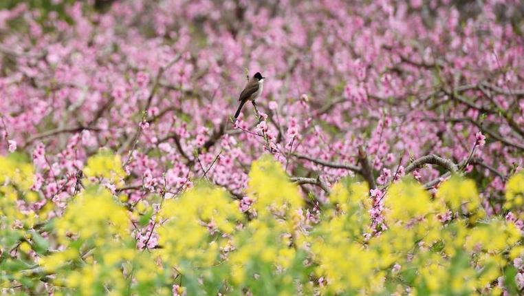 雀上枝頭享春色