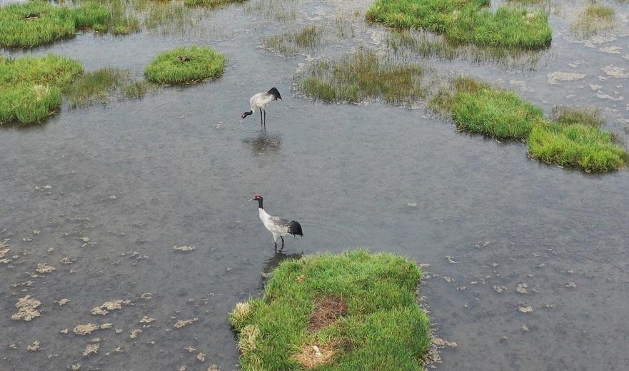 高原濕地 候鳥天堂