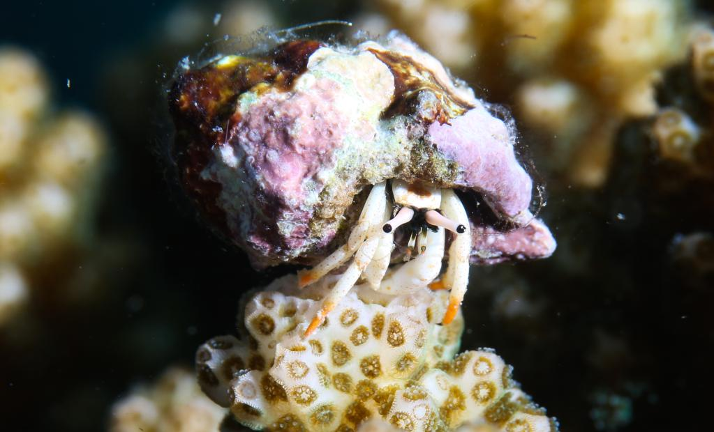 熱帶海洋牧場的水下世界