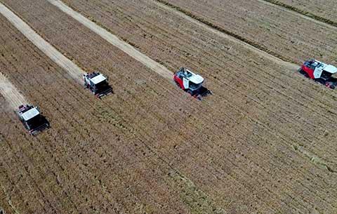 安徽省首次小麥百畝連片實收測産創佳績 平均畝産782.85公斤