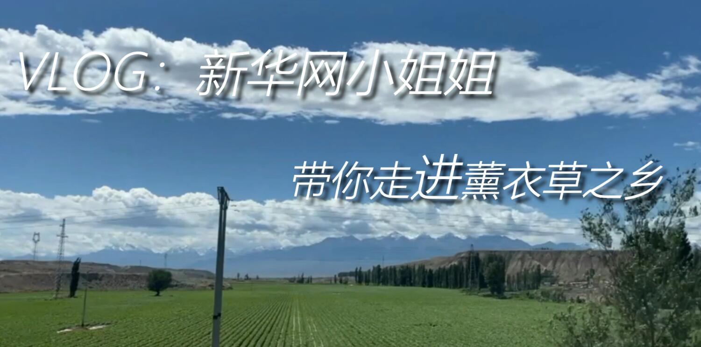 新疆是個好地方|VLOG:新華網小姐姐帶你走進薰衣草之鄉
