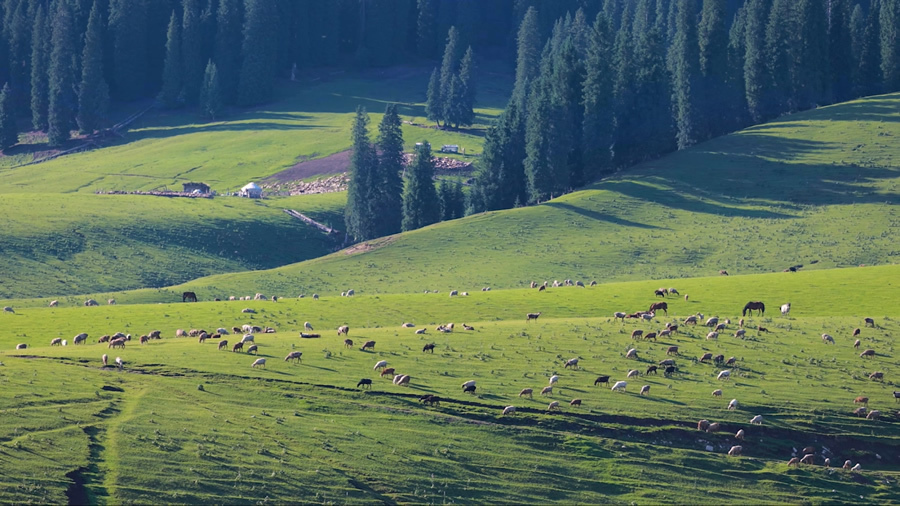 如果夏天一定要去一個地方,我選恰西草原