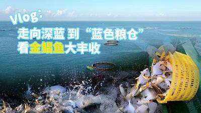 """農民豐收看廣東丨vlog:走向深藍 到""""藍色糧倉""""看金鯧魚大豐收"""
