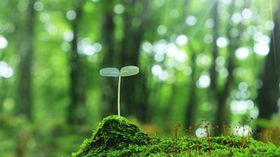 中央生態環保督察組向四川省移交第二十五批信訪件241件