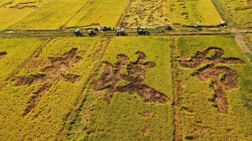 收獲,在希望的田野上——寫在2021年中國農民豐收節