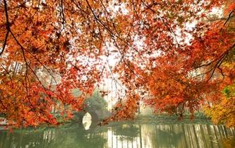 杭州:滿城楓情