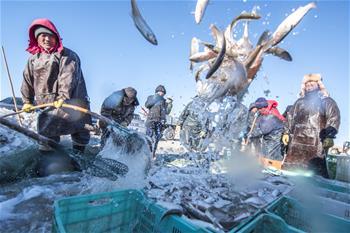 魚躍人歡冬捕忙