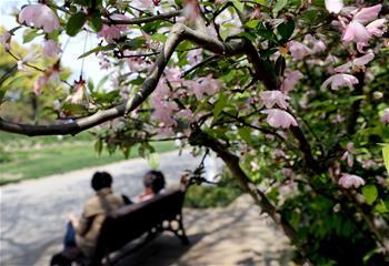 上海:春光明媚 海棠花開