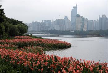 南寧:南湖岸邊花飄香