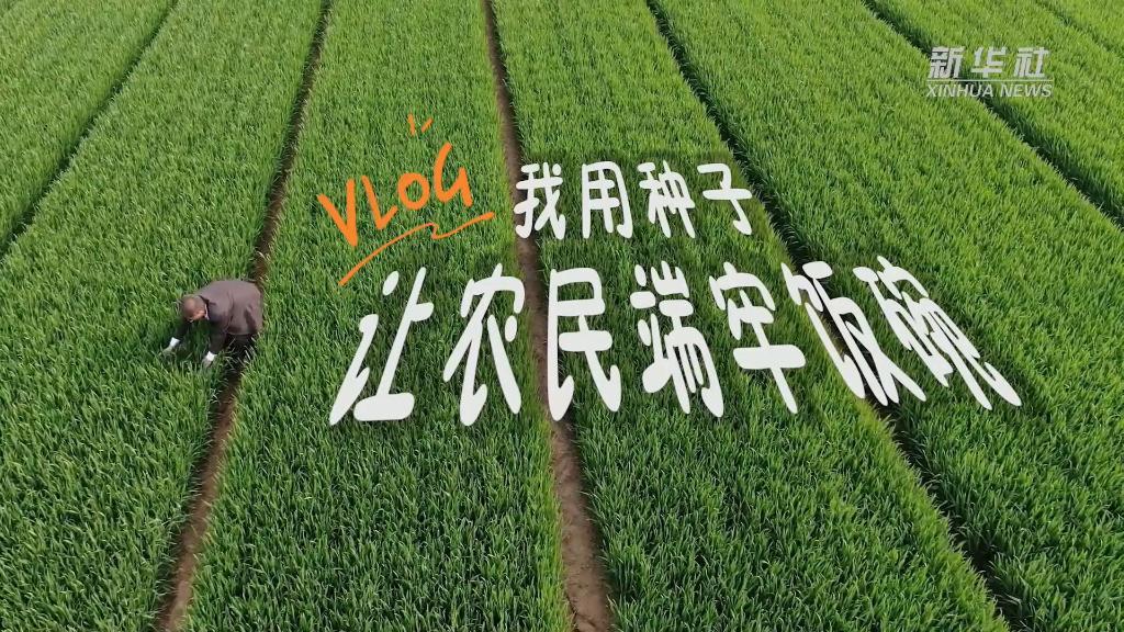 新華全媒+ 感受小康VLOG 我用種子讓農民端牢飯碗