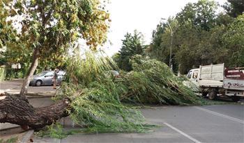 羅馬尼亞西部地區強暴風雨致8死近70傷