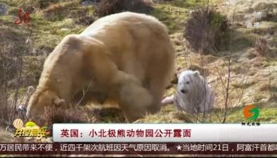 英國:小北極熊動物園公開露面