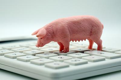 8月中旬哈爾濱生豬、豬肉價格創歷史新高