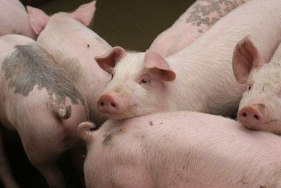 王金會代表:加快生豬穩産保供還需做好三件事