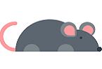 超百萬人類與小鼠調控基因元件公布