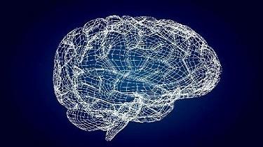 男女腦容量確實有別,根源或是性染色體