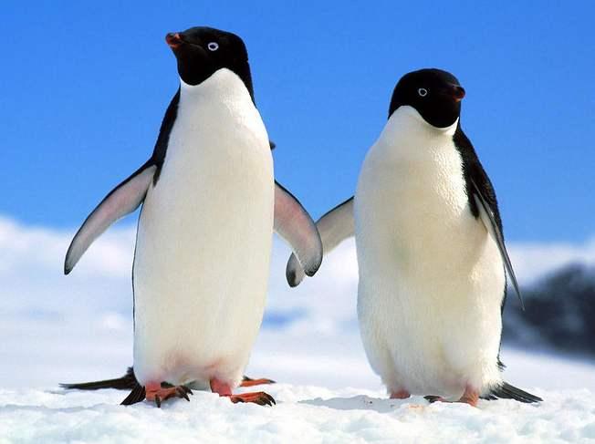 """首次發現!企鵝活動影響南極""""臭氧洞"""""""