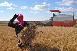黑龍江省已完成秋整地面積3877.7萬畝