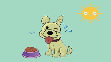 給狗狗剃毛真的可以幫助其散熱嗎?