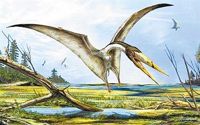 史前爬行動物再添成員 英科學家發現翼龍新物種