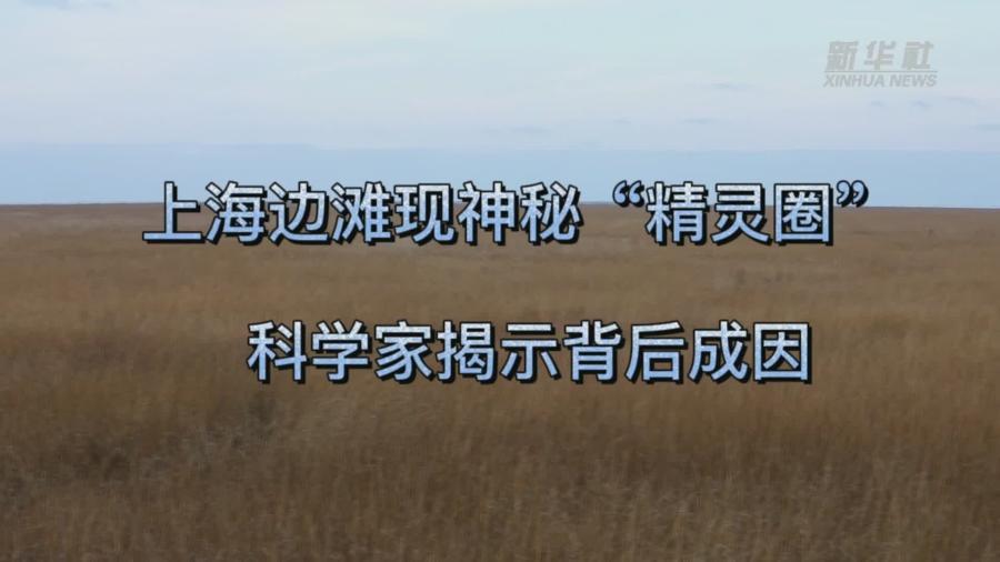 """上海邊灘現神秘""""精靈圈"""" 科學家揭示背後成因"""