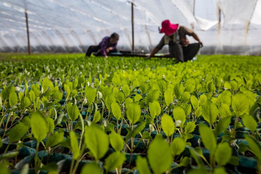 哈爾濱:蔬菜育苗備春耕